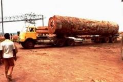 2017-05-03 Daf DO bomen transport